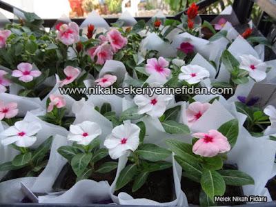 çiçek nikah fidanı İzmir Elif Başar - 6