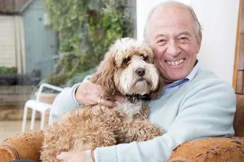 Cockapoo-good-companion-dog.