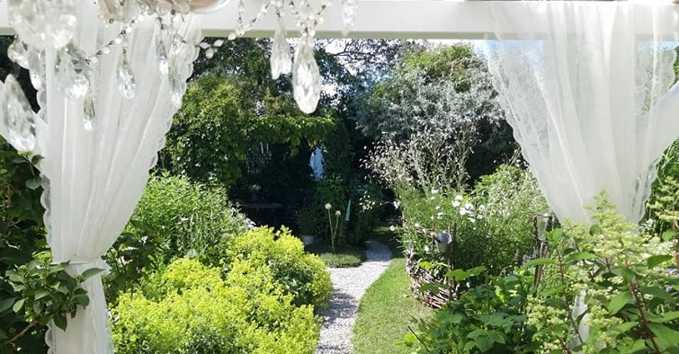 Frauenmantel im weißen Garten