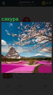 Весь газон покрыт красивыми цветами и растет сакура на фоне голубого неба