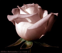 a rose/松岡晶子digital art(ペイント,写真)