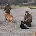 Carabineros entrena perros para detectar personas con COVID-19 a través del olfato