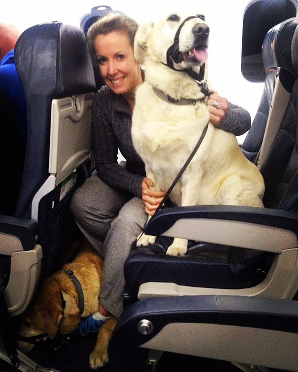Airlines Break Their Own Rules So Pets Can Escape Fires - They can comfort each other on the way to safety