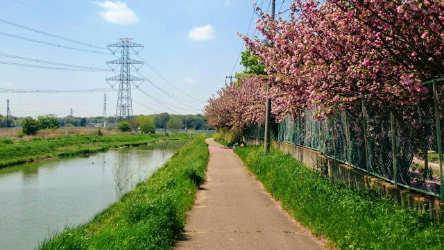 見沼代用水路とその支線用水路沿いに整備された「緑のヘルシーロード」・「水と緑のふれあいロード」をつないで騎西・玉敷公園の藤と牛島の藤を巡るサイクリングコース