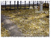 釣魚台國賓館銀杏大道 [坐火車去旅行2] 金秋北京 北京篇3
