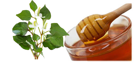 bí quyết trị mụn hiệu quả bằng rau diếp cá-3