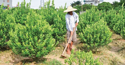 Viết về sở thích làm vườn bằng tiếng Anh ngăn gọn