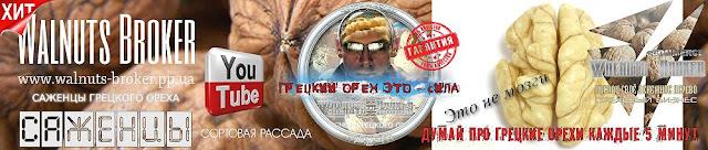 Саджанці горіха Ідеал Україна 0957351986, Walnuts Broker