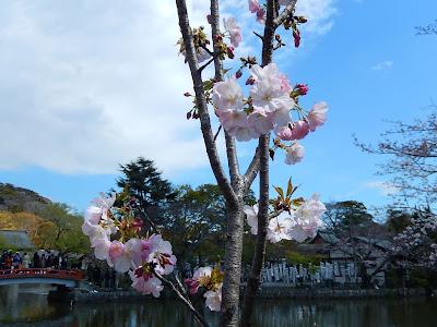 鎌倉桜桐ヶ谷