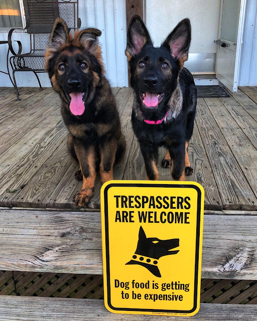 Trespassers Are Welcome Sign - Dog food is expensive