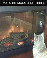 gato diabolico humor
