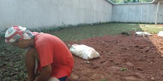 Jasa Pasang Rumput Gajah Mini Ditangerang