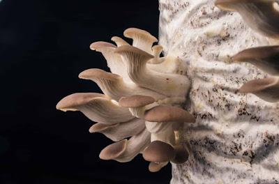Top mushroom training company Biobritte