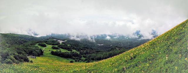 日光霧降高原 キスゲ平園地 ニッコウキスゲ