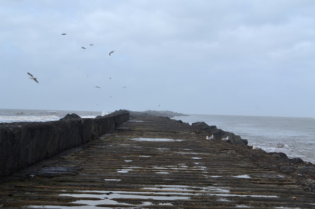 gulls on the jetty