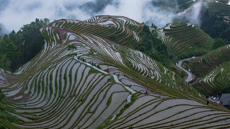 นาขั้นบันไดหลงจี่ (Longji Rice Terraces: 龙脊梯田)