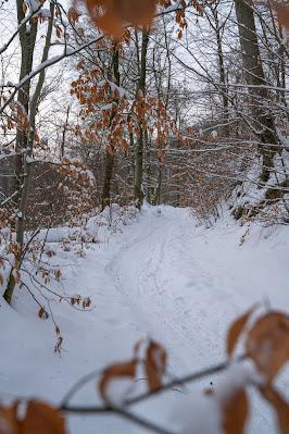 Winterwandern in Bad Harzburg | Kleiner und Großer Burgberg und Besinnungsweg | Baumschwebebahn | Wandern im Harz 01