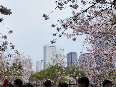 大阪造幣局 桜の通り抜け OBP大阪ビジネスパーク