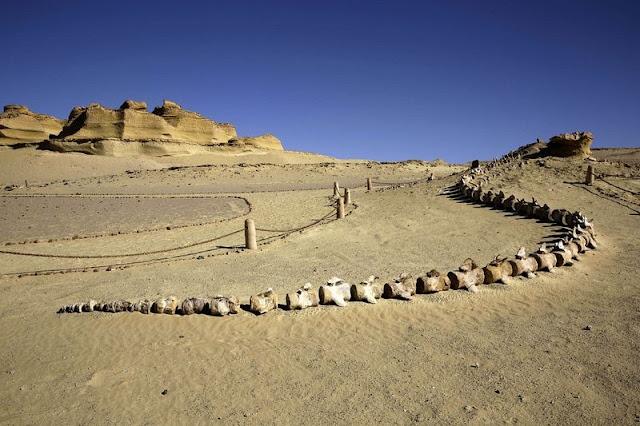 "Di lembah padang pasir Wadi al-Hitan, sekitar 150 km sebelah barat daya dari Kairo, Mesir. Telah dibuka museum pertama di Timur Tengah yang didedikasikan untuk fosil yang menampilkan bentuk awal dari paus, sekarang sudah punah dan dikenal sebagai ""paus berjalan. Inti dari museum adalah kerangka 37-juta tahun dan panjang 20 meter dari ikan paus berkaki yang memberi kesaksian bagaimana paus modern berevolusi dari mamalia darat. Lembah museum Paus ini juga rumah bagi alat prasejarah digunakan oleh manusia purba dan berbagai fosil ikan paus dipamerkan dalam kotak kaca menguatkan transisi evolusioner dari ikan paus awal dari darat ke makhluk air."