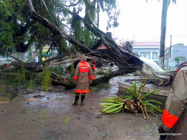 Árvore centenária cai em praça após chuva forte