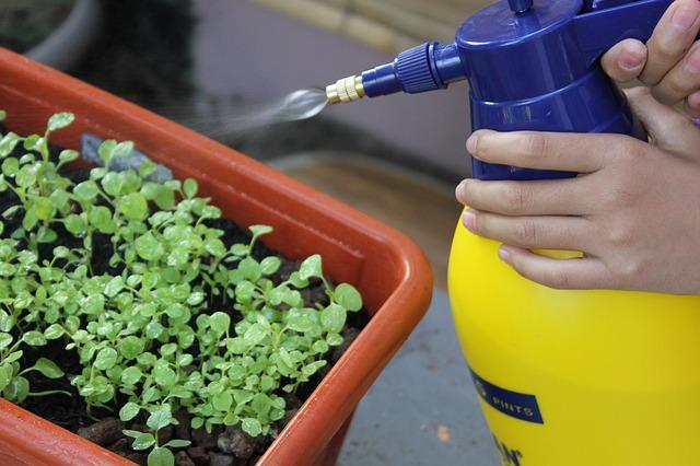 Sprayer for use on Seedlings in Plastic Pot