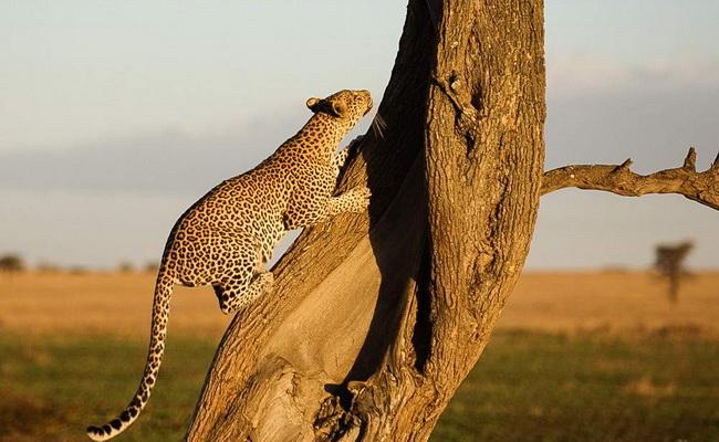 Xvlor.com Serengeti National Park is spectacular wildlife in Mara and Simiyu