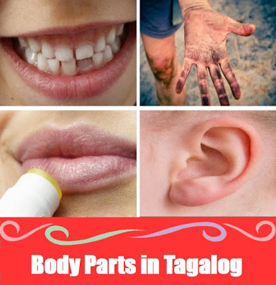 Body Parts Word List in Tagalog