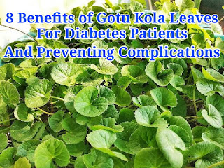 8 Benefits of Gotu Kola Leaves for Diabetes Patients and Preventing Complications