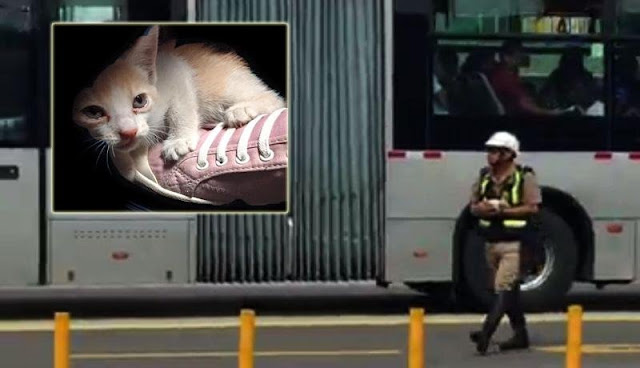Policía detiene el tránsito para salvar a gatita