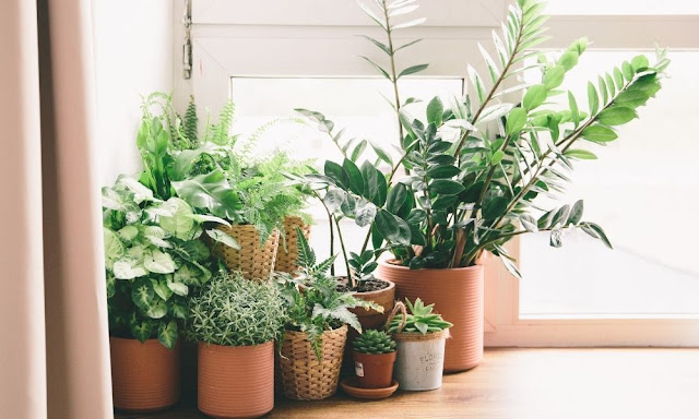 How to Redecorate Your Home the Green Way