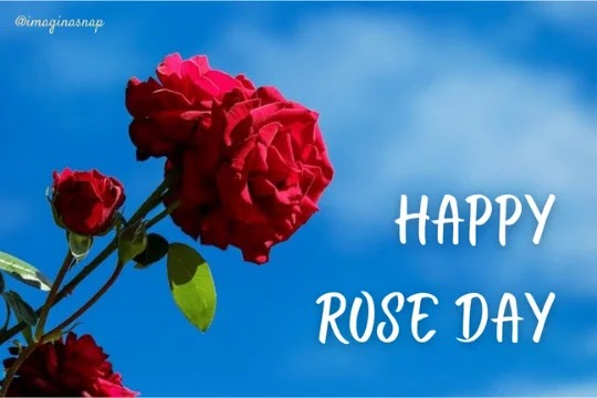 Happy rose day images for boyfriend