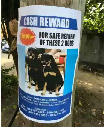 Man offers N100k reward for anybody with information on lost dogs