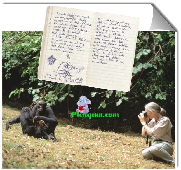 Figure Jane Goodall collecting qualitative data on chimpanzee behavior. Goodall recorded her observations in field notebooks, often with sketches of the animals' behavior.