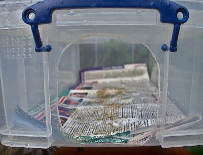 hog hedgehog feeding station