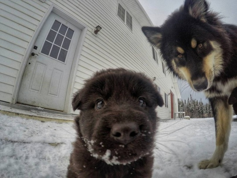 dentist from alaska and cutest dogs won the internet