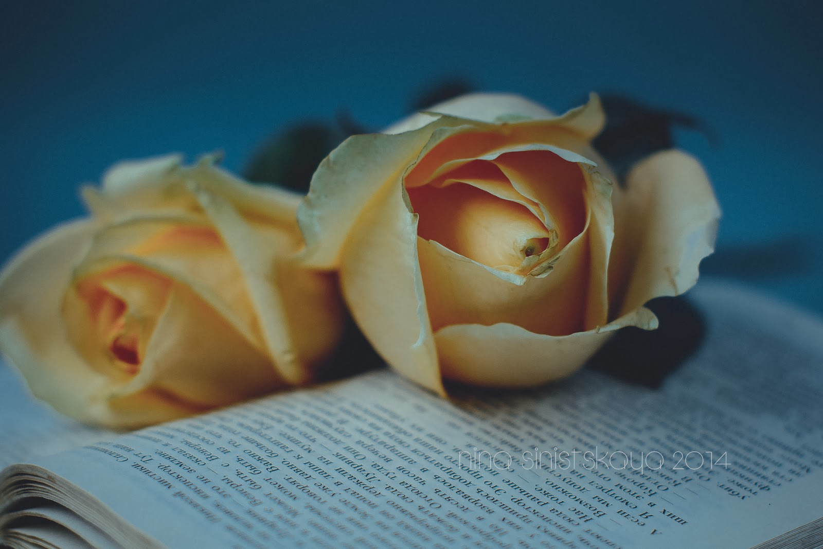 Floral Vintage Photography. Peach roses on the blue background. Vintage book with old paper pages. Soft focus and dreamy look