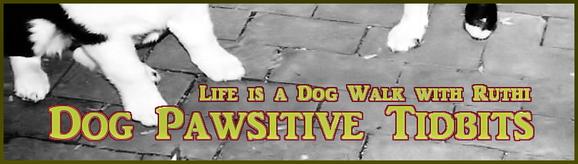 DOG PAWSITIVE TIDBITS