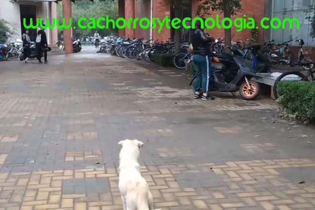 cachorro puppy dog adoptado despedida shurkonrad cachorros y tecnologia 3