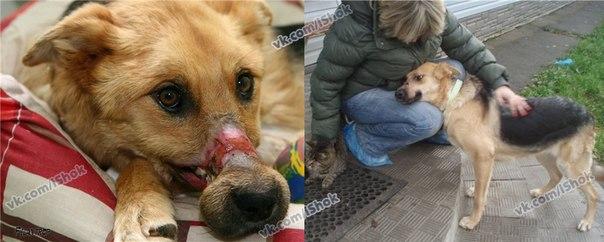 У бедной собаки морда была перемотана скотчем так, что сгнила до кости....