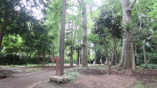 Rinshinomori park running trail