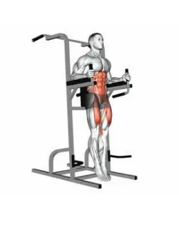 ABS Exercises - captain's chair leg raise