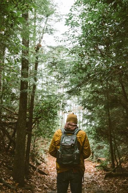 Tựa như tách biệt với thế giới bên ngoài, du khách ngồi giữa rừng, tận hưởng buổi chiều yên ắng và hồi hộp chờ đợi màn đêm buông xuống. Thành quả thu được là trải nghiệm tuyệt vời khi được hòa mình vào khung cảnh tự nhiên rực sáng ngỡ như không có thật trên đời, khiến du khách nhớ mãi.