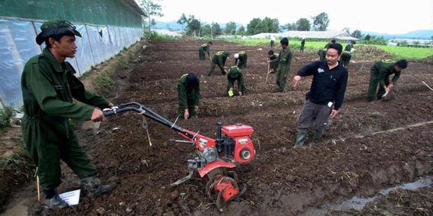 Peluang Kerja Jurusan Agribisnis dan Prospek Alumni