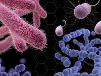 Klasifikasi Bakteri Berdasarkan Karakteristik Dinding Sel