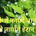 Neem Ke Fayde Or Nuksan- Neem Benefits And Side Effect In Hindi