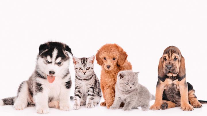 most popular animals