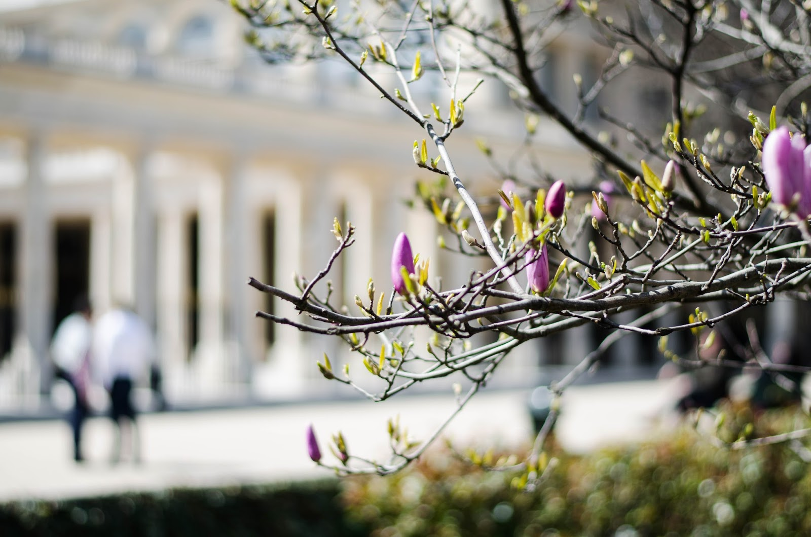 paris jardin du royal palais spring blossom