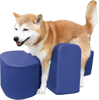 aparelho de permanência para cães