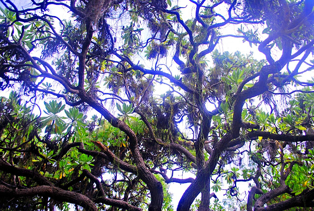the canopy of trees in Mantigue Island