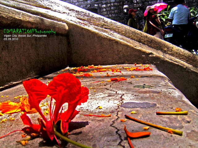 Vigan City | Plaza Burgos in Orange Bloom